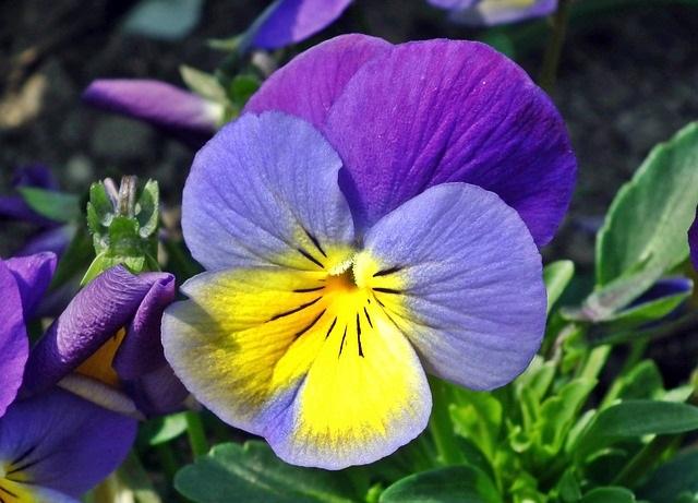 flower-3261108_640 (1)