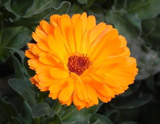 flower-3278624_640.jpg